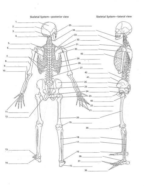 skeletal system diagram pdf skeleton diagram blank anatomy organ