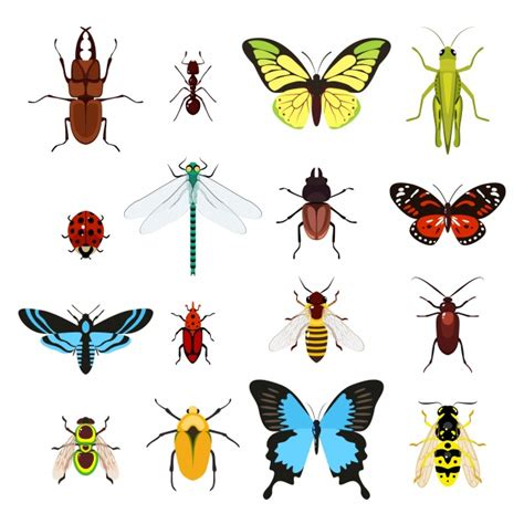 Imagenes De Insectos Vectores | insect vectors photos and psd files free download