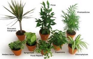 les plantes int 233 rieures d 233 polluantes ou les placer clg