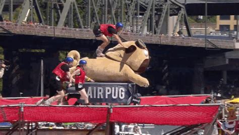 pug world records sethblogs 187 archive 187 when pugs fly