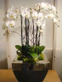 best 25 orchid arrangements ideas on