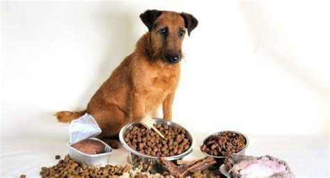 best puppy food for sensitive stomach best food for sensitive stomachs a place for animals