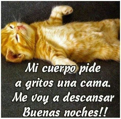 imagenes de buenas noches chistosas 60 best images about mms on pinterest ouija spanish and