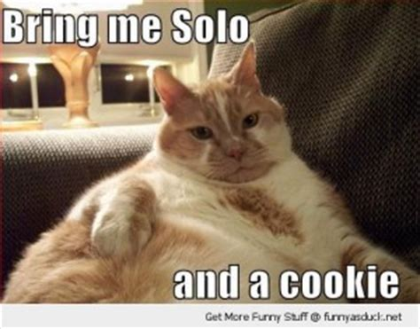 han solo hysterical quotes. quotesgram