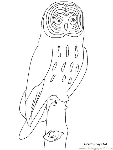 realistic owl coloring page realistic bird coloring pages coloring pages