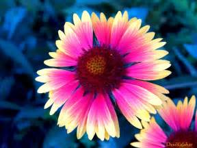 desikalakar pretty flowers