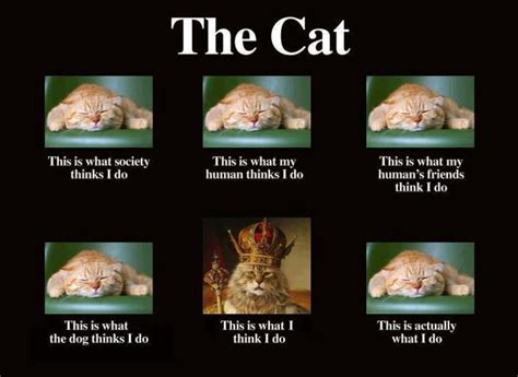 what cats actually do imghumour