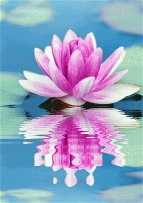 Lotus Animated Gif Services Healing Touch Reflexology Yucca