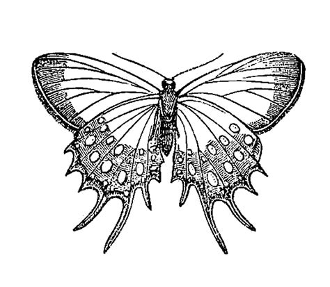 butterfly pattern black and white clipart antique images vintage insect clip art butterfly graphic