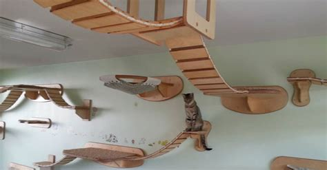 Cat Friendly Home Design Ceiling Cat 171 Twistedsifter