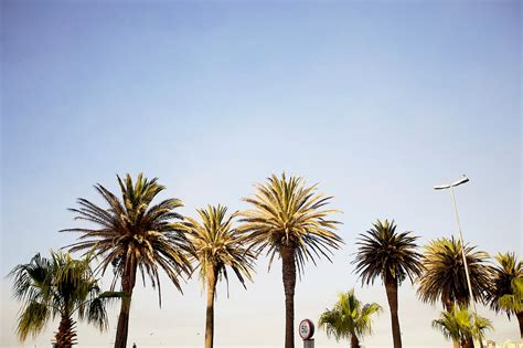 Live Palm Tree Wallpaper by Palm Trees Wallpaper Gallery
