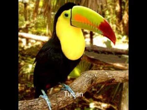 imagenes de animales terrestres tipos de animales youtube