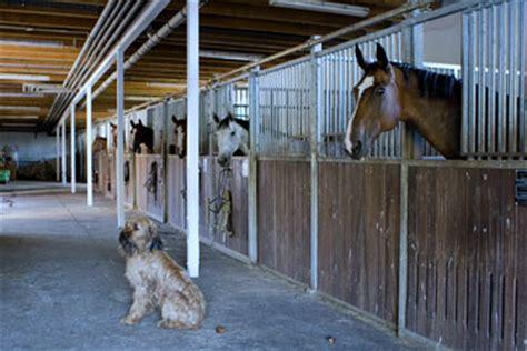 stall pferd reitstall gersdorf erlebe dein pferd