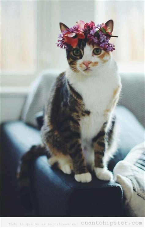 imagenes hipster gatos resultado de imagen para gatos fotos tumblr gatos