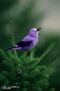 are birds color blind i m starting to see this surface as quot a purple bird wow