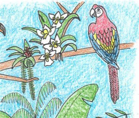 rainforest colors adopt a rainforest rainforest alliance