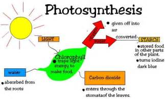 define light dependent reaction two stages of photosynthesis ehow