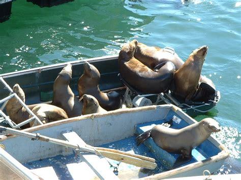 monterey boats net worth ca 1 monterey big sur