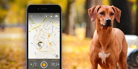 how to tracking dogs how to track walks with gps