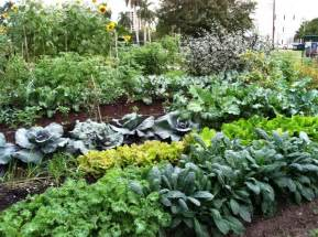 organic vegetable seeds images