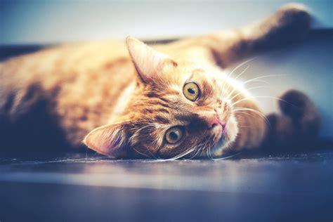 alimentazione gatti sterilizzati miglior cibo secco per gatti sterilizzati e non