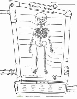 diagram worksheets 4th grade skeleton diagram a well science worksheets and chang e 3