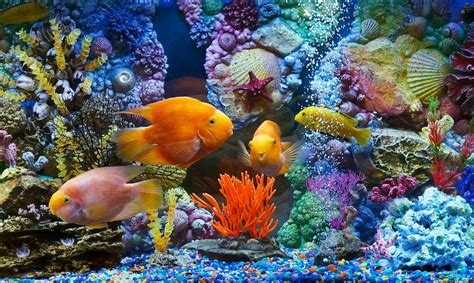 fish tank wallpaper  images