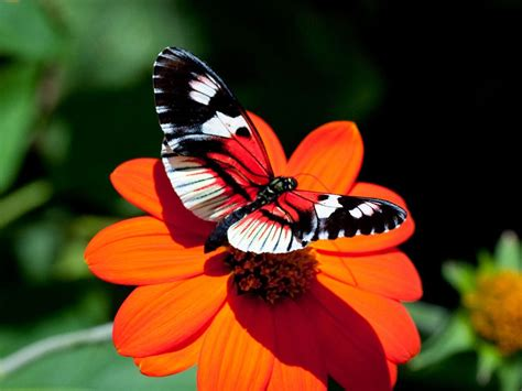 butterflies flowers wallpapers butterfly desktop backgrounds