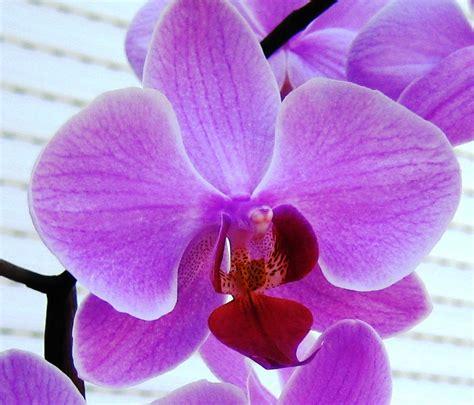 orchid guides blog april 2013