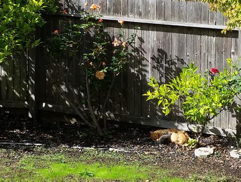 stray kittens in backyard stray cat and kittens in backyard 28 images stray cat