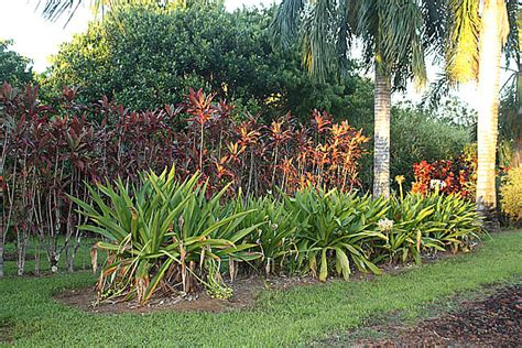 Hilo Botanical Garden Big Island Coast 2009