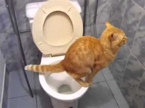 How To Stop A Cat From Pooping On The Floor by Cat