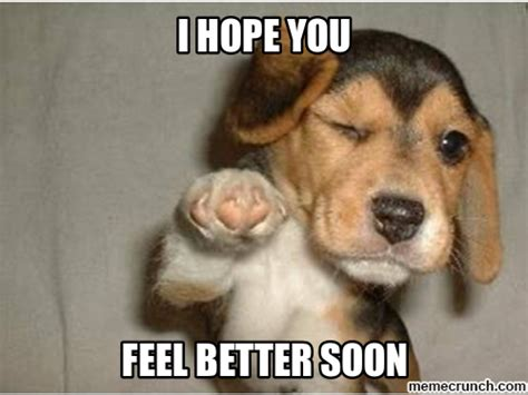feel better meme feel better puppy
