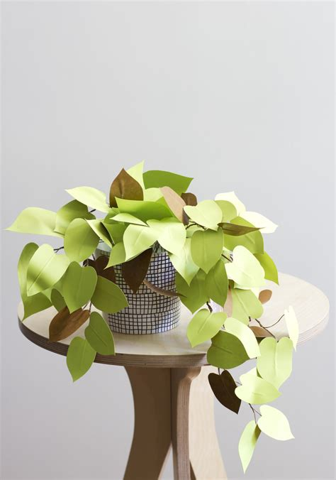 Paper Plant - diy pretty and carefree paper plants gardenista