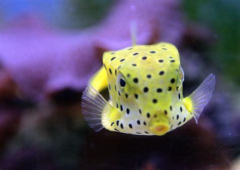 pesce testa di serpente la volta mercedes copi 242 un pesce per fare un auto il