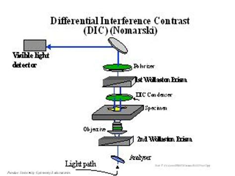 Light Interference Differential Interference Contrast