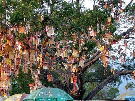 lam tsuen wishing tree new year lam tsuen wishing tree hong kong all you need to