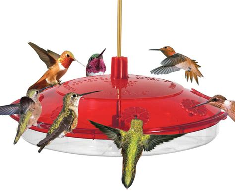 new large hummingbird feeder bird feeders by songbird