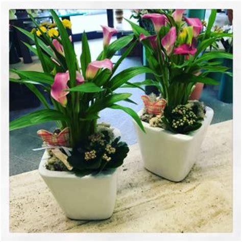 calla in vaso il fiore di oggi la calla idee fiorite