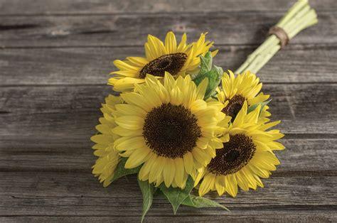 Single Stem Vase Sunrich Limoncello Summer Sunflower Seed Johnny S