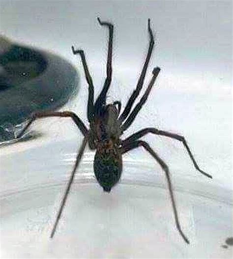 bed spiders spider in bed pest control canada
