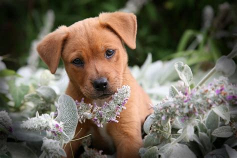8 Doggies Id To Meet by The In World Lovely And Likely