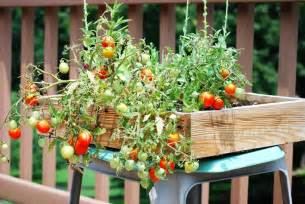Small raised box container vegetable gardening from recycled wood with