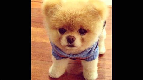 imagenes animales mas tiernos los 10 perros mas tiernos del mundo el n 218 mero 4 te