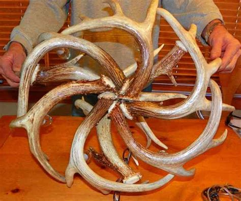 How To Make Deer Antler Chandelier Whitetail Antler Chandelier Decor Ideasdecor Ideas