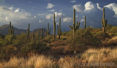 standing tall the american southwest landscape photography by mark capurso