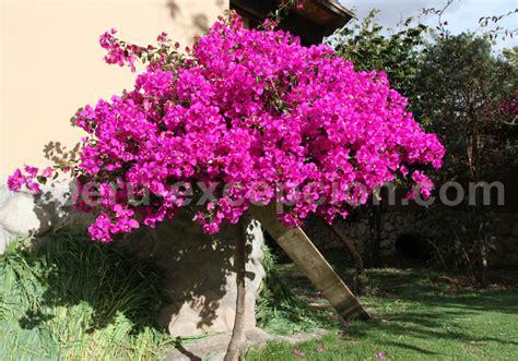 Petit Arbuste Fleuri by Les Arbres Et Arbustes Du P 233 Rou