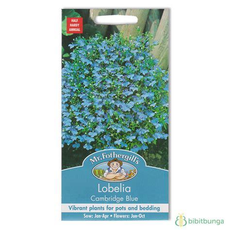 Benih Bunga Mr Fothergills Import Cornflower Blue benih lobelia cambridge blue 2500 biji mr fothergills