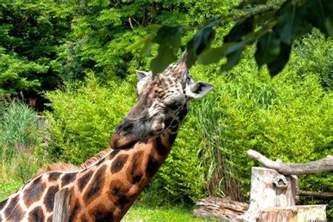 Zoologischer Garten Leipzig Preise zoo leipzig bild zoologischer garten leipzig
