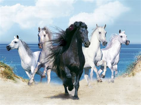 wallpaper for desktop of horses 301 moved permanently